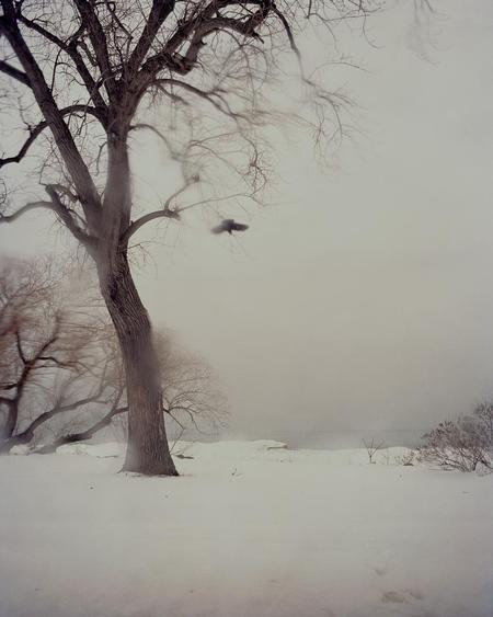 #10192-50, 2011 Chromogenic print.  76 1/2 x 59 1/2 inches
