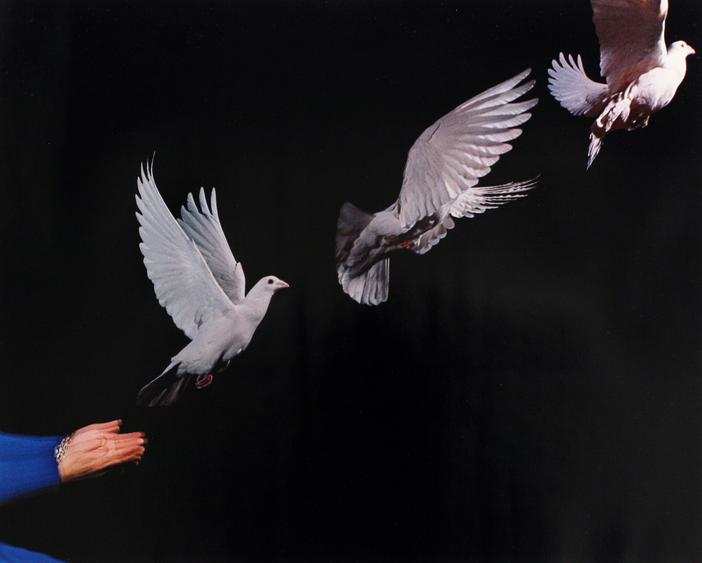 Pigeon Released, 1938-1973 Dye transfer print 16 x 20 inches