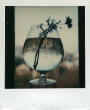 May 3, 1979 SX-70 Polaroid 4 1/4 x 3 1/2 inches
