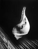 City Shell, 1938 Photogram mounted to board, printed 1938 19 1/2 x 15 inches