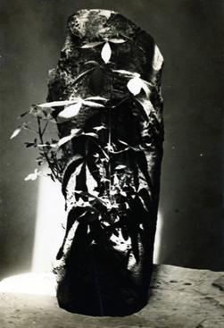 Trunk of a Chestnut Tree in the Studio, c. 1934 Gelatin silver print, printed c. 1934. 10 1/4 x 7 1/8 inches