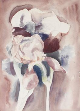 Charles Demuth  Irises, c. 1925    Watercolor on paper. 13 3/8 x 9 3/4 inches