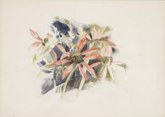 Charles Demuth  Daisies, 1932    Watercolor and graphite on paper. 9 3/4 x 13 5/8 inches