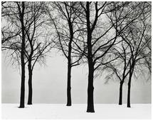 Chicago, Trees in Snow 1950 Gelatin silver print 8 x 10 inches