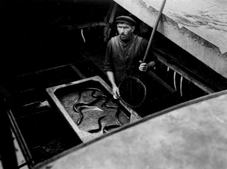 Mr. Eier, Dutch Eel Boats, London, c. 1934 Gelatin silver print, printed c. 1934 3 1/4 x 4 1/4 inches