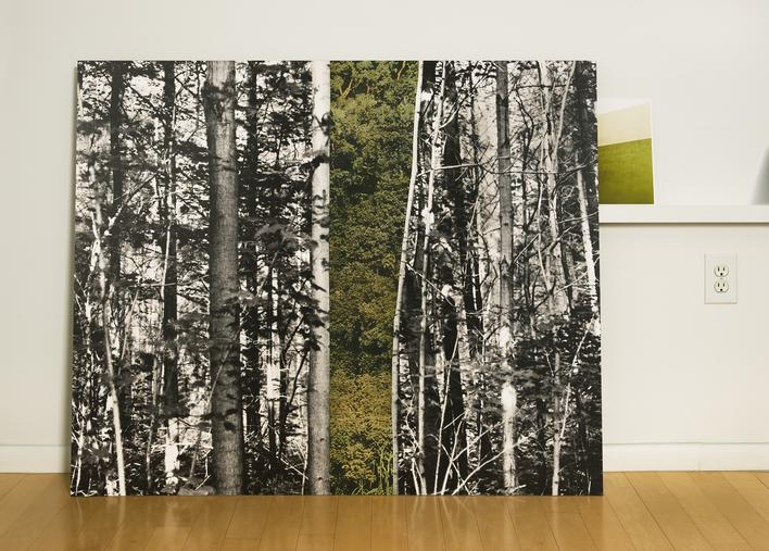 Forest in the Studio, 2014     Chromogenic print. 47 x 65 1/2 inches