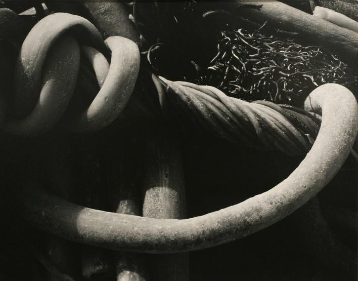Kelp, 1930 Gelatin silver print mounted to board, printed c. 1930 7 1/2 x 9 1/2 inches