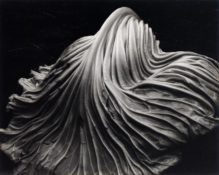 Cabbage Leaf, 1931 Gelatin silver print mounted to board, printed c. 1951-52 7 1/2 x 9 1/2 inches