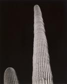 Frederick Sommer Untitled, c. 1940 Gelatin silver print mounted to board. 9 1/2 x 7 5/8 inches