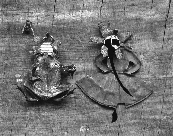 Flower and Frog, 1947-1948 Gelatin silver print mounted to board, printed c. 1947-1948. 7 9/162 x 9 1/2 inches
