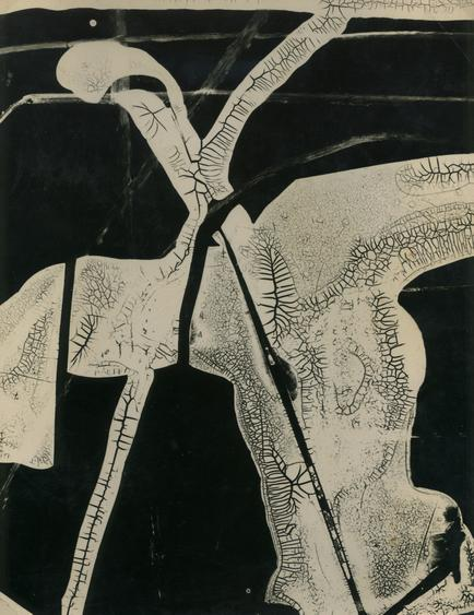 Gyorgy Kepes Untitled, 1938 Cliche verre photogram, printed c. 1938 9 1/2 x 7 1/2 inches