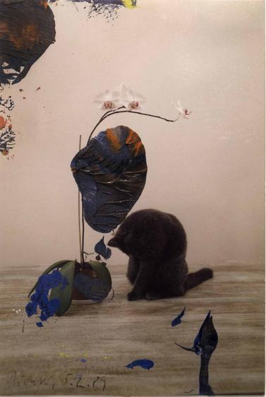 Untitled, 2/5/89, 1989 Oil on photograph