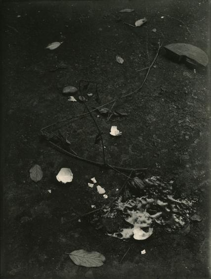Untitled (Still life with Branches and Broken Egg), c. 1950-54 Gelatin silver print, printed c. 1950-54 9 x 7 inches