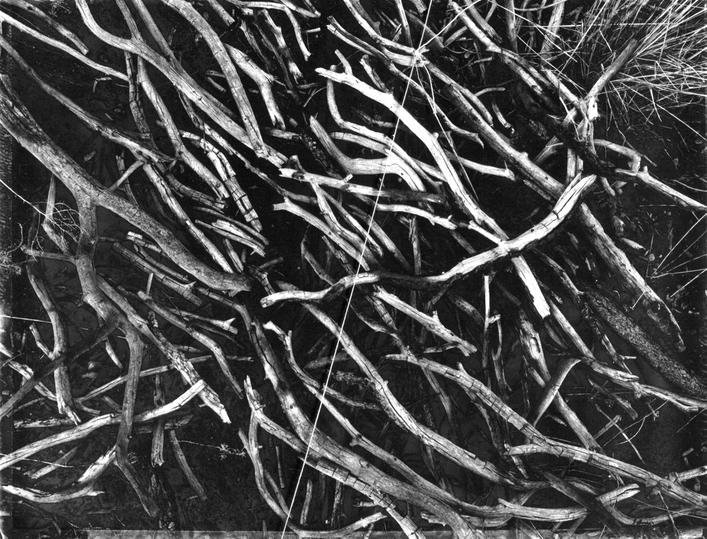 Actual Line and Arranged Pinon Branches, 1967 Gelatin silver print with taut string mounted to board 9 1/4 x 11 inches