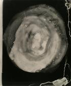 Untitled #3, from Nine Imaginary Oil Spills, 1995 Cliche verre, gelatin silver print, printed c. 1995. 24 x 20 inches
