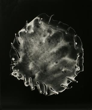 Untitled #4, from Nine Imaginary Oil Spills, 1995 Cliche verre, gelatin silver print, printed c. 1995. 24 x 20 inches