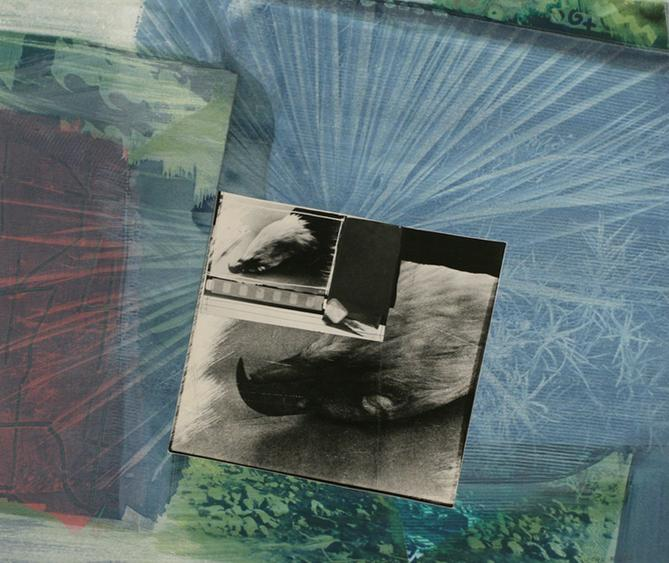 Eagle Pelt, 1988     Collage and cyanotype 14 x 16 1/4 in.