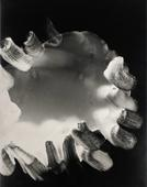 Untitled #9, from Nine Imaginary Oil Spills, 1995 Cliche verre, gelatin silver print mounted to board, printed c. 1995. 24 x 20 inches