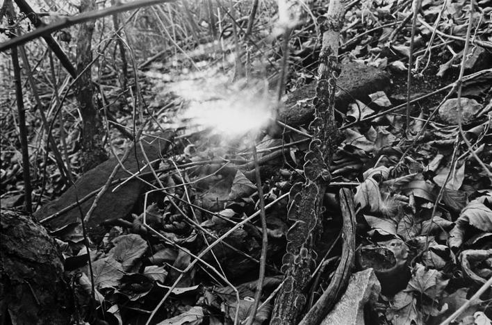 Seed in Sunlight, 1977 Gelatin silver print, printed 1977. 16 x 20 inches