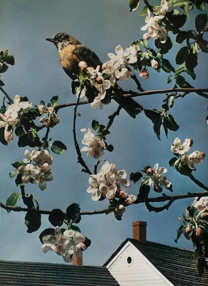 Paul Outerbridge, First Robin of Spring