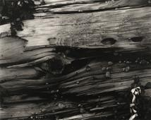 Driftwood #3, 1928 Waxed platinum print mounted to board, printed c. 1928 7 5/8 x 9 5/8 inches