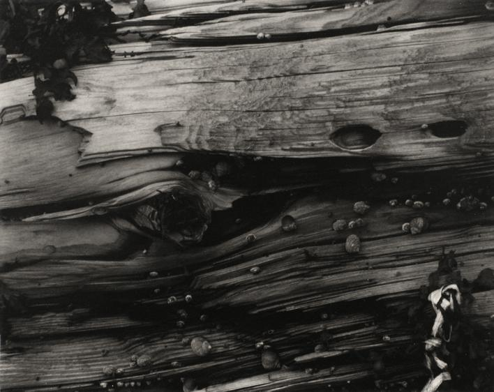 Paul Strand Driftwood #3, Maine, 1928 Waxed platinum print mounted to board, printed c. 1928. 7 5/8 x 9 5/8 inches