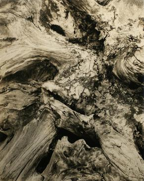 Paul Strand  Driftwood, 1926 Gelatin silver print, printed c. 1926. 9 1/2 x 7 1/2 inches