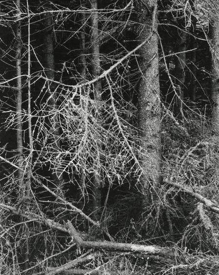 Paul Strand  Dark Forest, Georgetown, Maine, 1928 Gelatin silver print, printed c. 1950s. 9 5/8 x 7 5/8 inches
