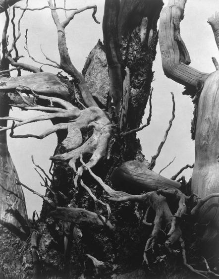 Paul Strand  Blasted Tree, Colorado, 1926 Platinum print, printed c. 1926. 9 5/8 x 7 5/8 inches