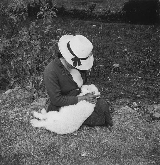 Catalin's Valentine's Lamb, 1981 Gelatin silver print. 20 x 16 inches
