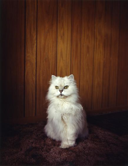 #1843, 1996 Chromogenic print. 38 x 30 inches