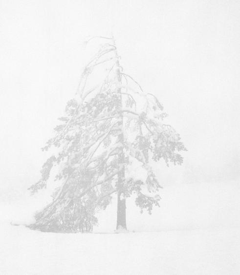 Trine Sondergaard & Nicolai Howalt Tree #12, 2008    Chromogenic print. 19 5/8 x  20 1/2 inches
