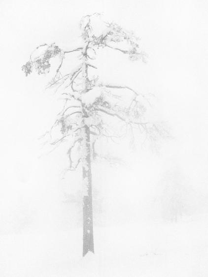 Trine Sondergaard & Nicolai Howalt Tree #6, 2007    Chromogenic print. 19 1/4 x 14 3/16 inches