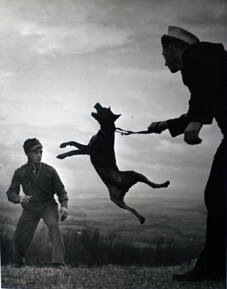 Early Work, Dog Training, c. 1940 Gelatin silver print, printed c. 1940 16 x 20 inches