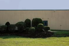 Bushes in Front of Tech School, 2001-2006 Archival pigment print mounted to board 22 1/2 x 34 inches