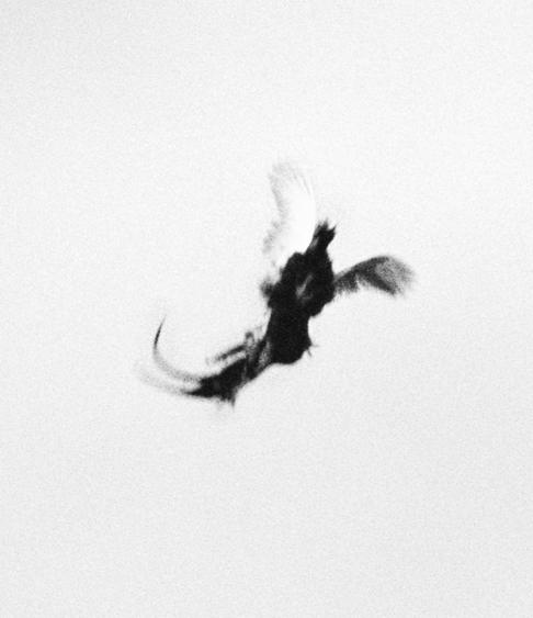 Trine Sondergaard & Nicolai Howalt Dying Birds #8, 2005-2010    Photogravure. 20 1/2 x 17 3/4 inches